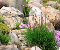 Skalka, skalničky, očkování růží, půda pro jehličnany, výsadba jehličnanů a příprava půdy - Srpen, díl druhý