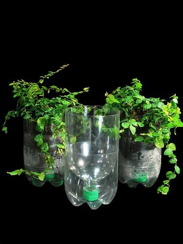 Návod jak vyrobit a pěstovat hydroponie